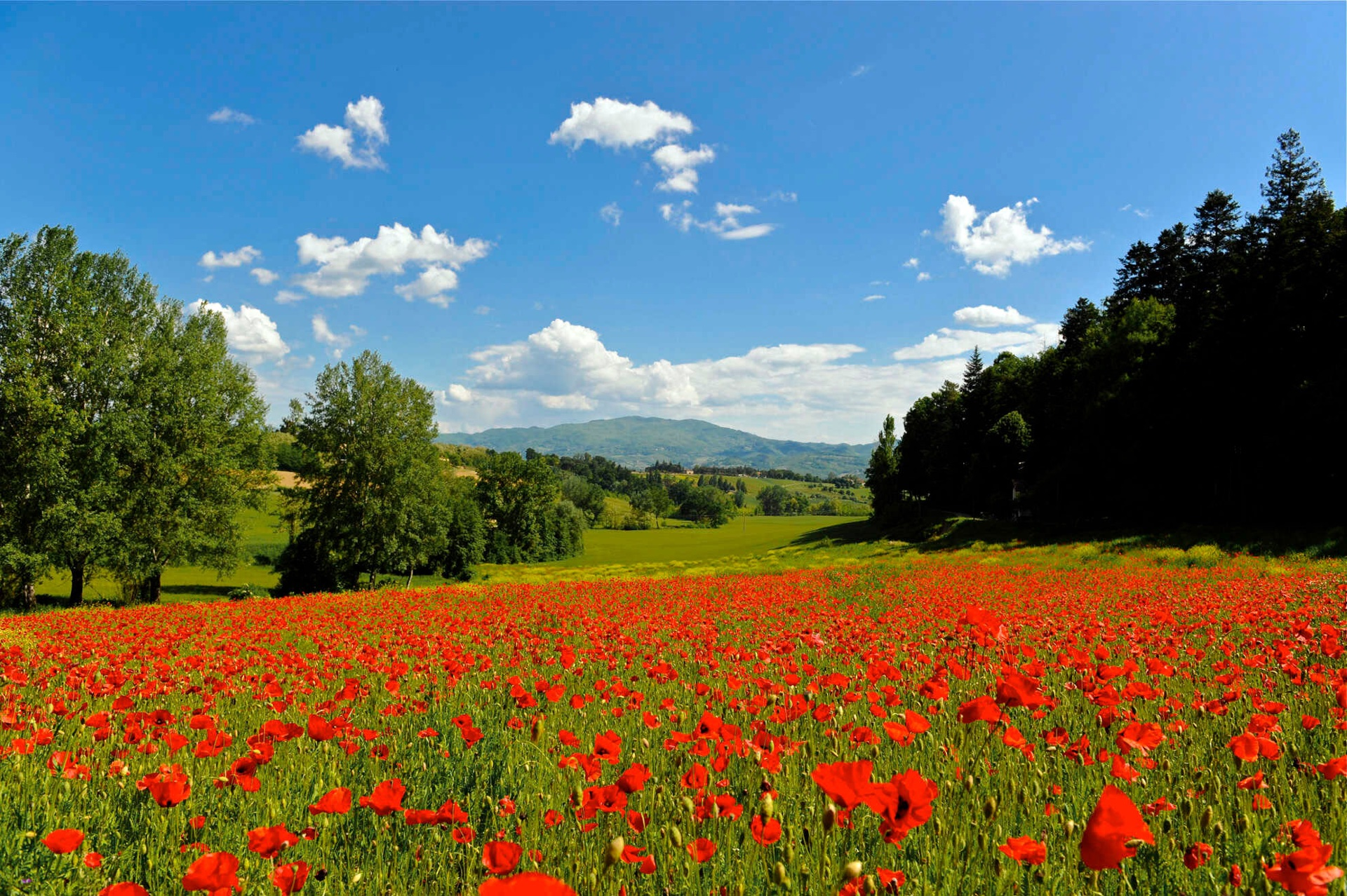 The beauty of nature, in the splendid backdrop of the Tuscan Appennines